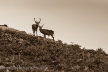 Young Red Stags_BradgatePark