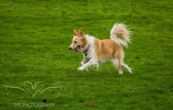 Dog Photography-16-1