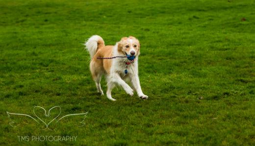 Dog Photography-17-1