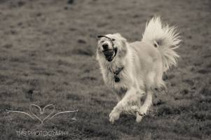 Dog Photography-18-1