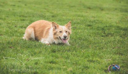 Dog Photography-2-1