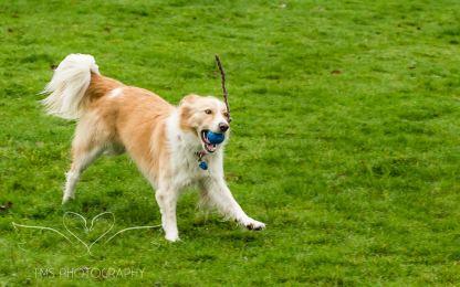 Dog Photography-3-1