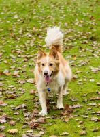 Dog Photography-30-1
