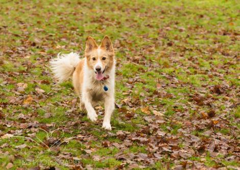 Dog Photography-32-1