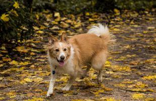 Dog Photography-37-1