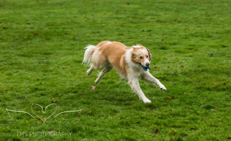 Dog Photography-4-1
