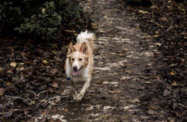 Dog Photography-41-1