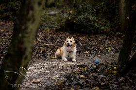 Dog Photography-43-1