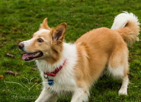 Dog Photography-5-1