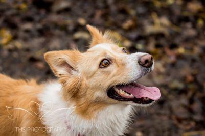 Dog Photography-57-1