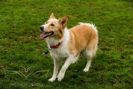 Dog Photography-6-1