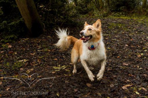 Dog Photography-63-1