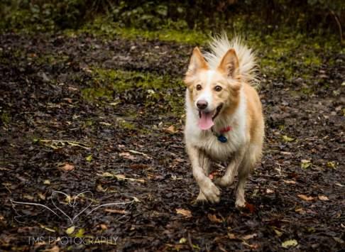 Dog Photography-67-1