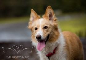 Dog Photography-75-1