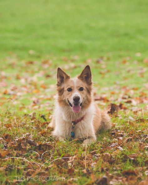 Dog Photography-76-1