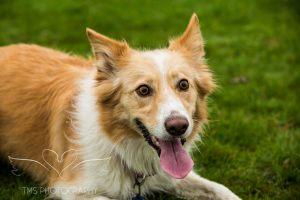 Dog Photography-8-1
