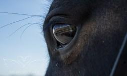equine_Photoshoot_Tithe_Tia-4