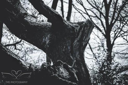 Hicks Lodge_TMSPhotography