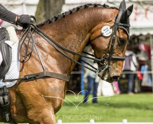 Chatsworth Horse Trials 2015-47