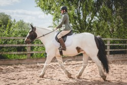 Equine_Photography_DerbyshireTMSPhotography-28