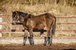 equinephotographer_Derbyshire-17