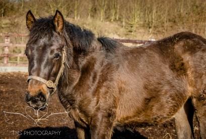 equinephotographer_Derbyshire-2
