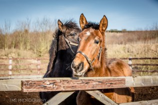 equinephotographer_Derbyshire-23