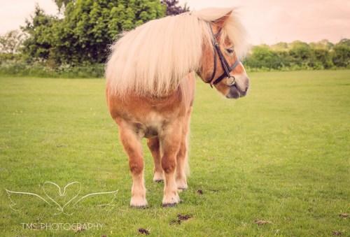 equinephotographer_Derbyshire-3