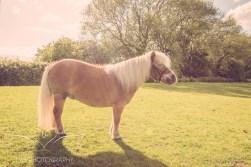 equinephotographer_Derbyshire-8