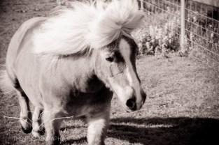 equinephotographer_Derbyshire-9