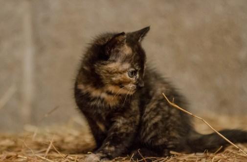 Kittens_photos (11 of 21)