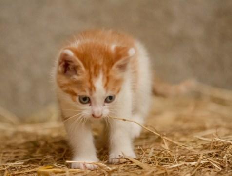 Kittens_photos (14 of 21)