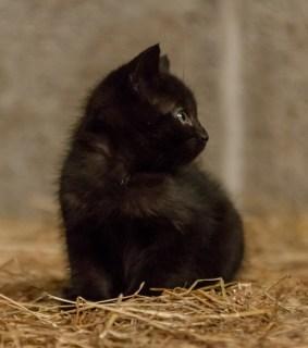 Kittens_photos (6 of 21)