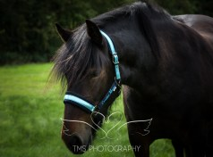 equinephotographer_Leicestershire-22
