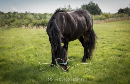 equinephotographer_Leicestershire-29
