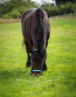 equinephotographer_Leicestershire-30