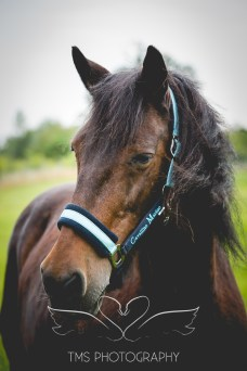 equinephotographer_Leicestershire-35