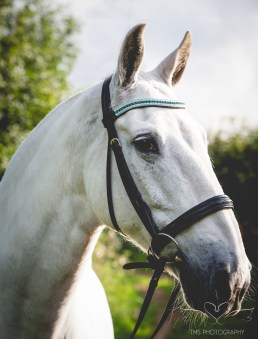 equine_photographer_Derbyshire-36