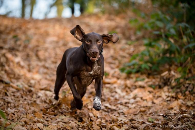 Dog_photographer_Shropshire_PointerX.jpg