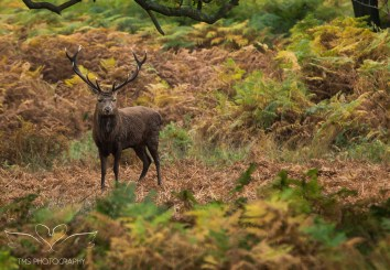 bradgatepark_photography-18-of-34