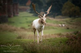 bradgatepark_photography-2-of-34