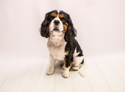dog_photographer_leicestershire-26