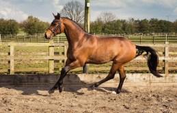 Horse_photographer_Derbyshire-12