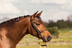 Horse_photographer_Derbyshire-19