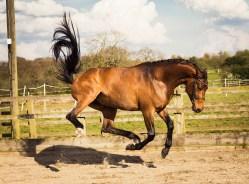 Horse_photographer_Derbyshire-32