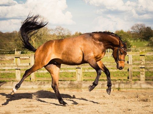 Horse_photographer_Derbyshire-33