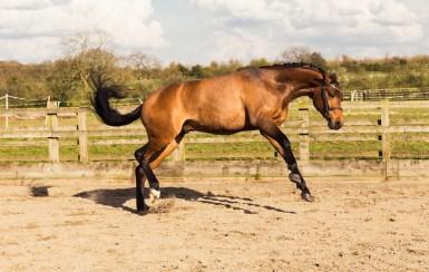 Horse_photographer_Derbyshire-34