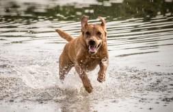 Dog_photographer_Derbyshire-18