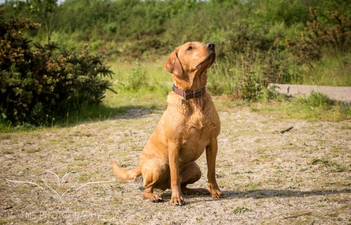 Dog_photographer_Derbyshire-22