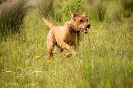 Dog_photographer_Derbyshire-25